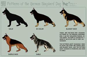 history-shepherd
