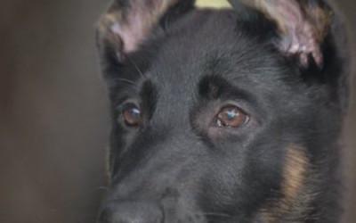 Oh Those EARS!!