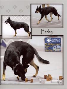 OB - Harley Classic