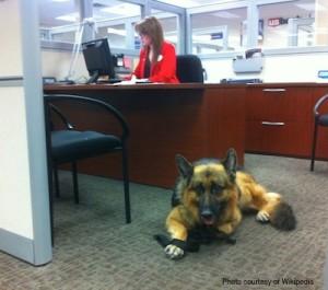 service-dog-wiki