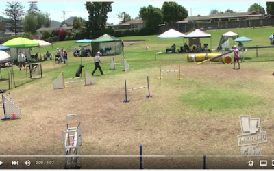 Lana Does It Again! Standard Agility Run – 2 Videos!