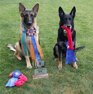 4-11-15-winner-dogs-2