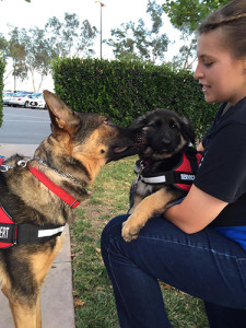 Service Dog - Dante's Daughter 2