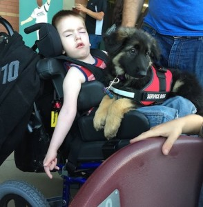1x - Service Dog - Dante's Daughter 1