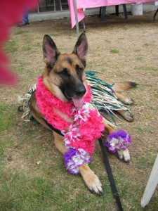 """Sonoma"" all dressed up to announce the Luau!"