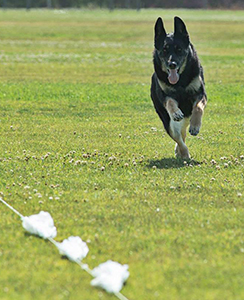 LANA Lure Coursing-4-front