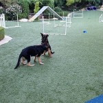 deborah-dogs-backyard-2