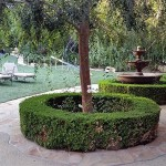 fountain-trees-yard