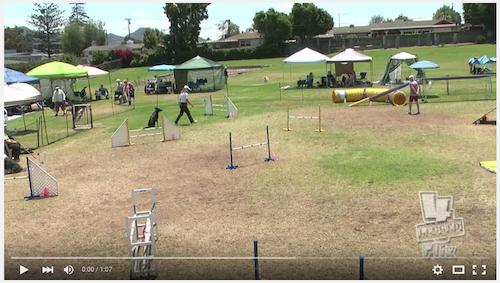 Lana Does It Again! Standard Agility Run – 2 Videos!